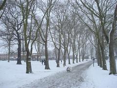 snow day (Jan 2009) - 19