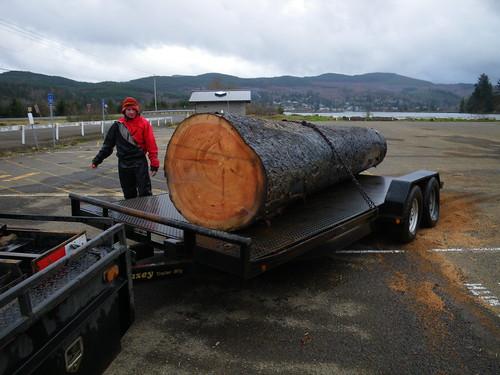 Big spruce log
