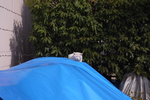 Today's Cat@20090221