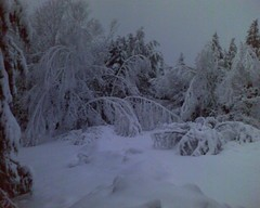 Snow Day 2009-2-25