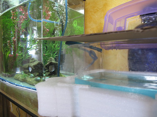 aquarium fishtank dripmethod acclimating