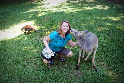 kissin' kangaroo