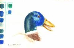 wcp_class_duck