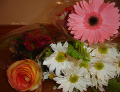 Flores variadas (Marta Felipe) Tags: flores arranjos astromelia