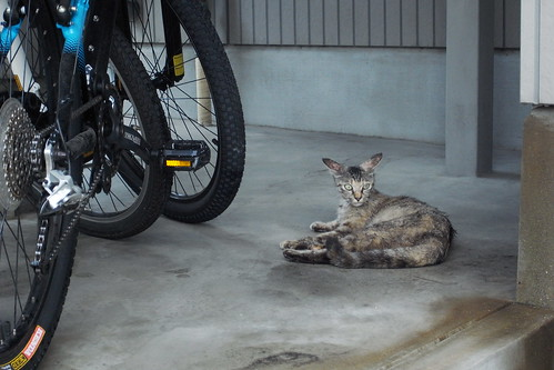 Today's Cat@20090722