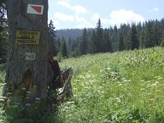 Bergwiese (fischwolf) Tags: wiese rila gebirge bulgarien
