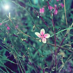 Every day (FotoRita [Allstar maniac]) Tags: life light italy rome flower roma colors digital canon bokeh everyday fiore myfavourites fucsia luce byfotorita canonpowershotg10