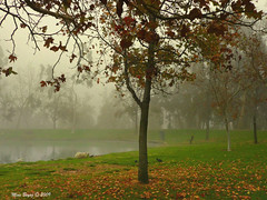 Play Misty for Me... (Mine Beyaz) Tags: california park trees leaves misty fog foggy sis placentia fullerton brea agac sisli yapraklar yaprak tricity misy mywinners theperfectphotographer minebeyaz trycitypark