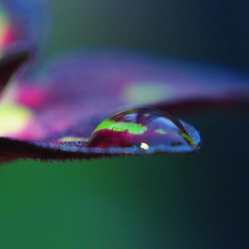 the color-filled droplet.