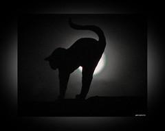 Die Katze auf dem kühlen Ziegeldach mit Vollmond - Cat on the hot brickroof with full moon (1)