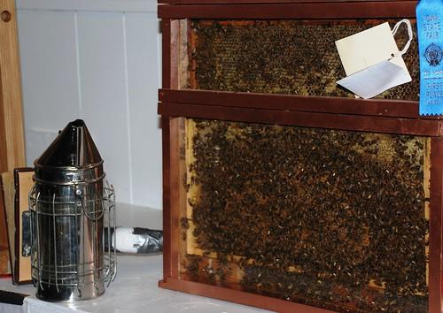winning bee hive
