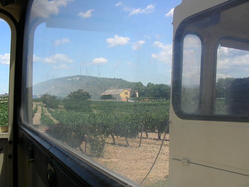 Vista difícil d'un celler a Bodegues Torres des del tren turístic