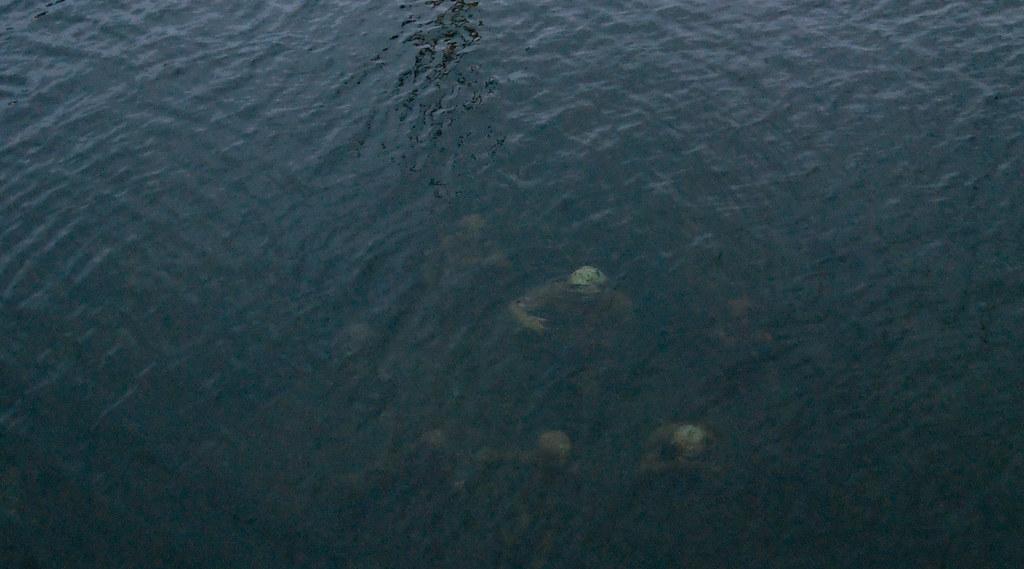 Copenhagen: Underwater Statues