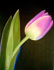 Tulip (Marisol Covelo) Tags: flowers urban flower color art nature pencils painting nikon europe sketching pastels colored draw watercolors supplies coloredpencils sketches dibujo artsupplies lamy oleo lpiz