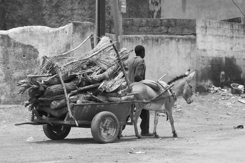 Donkey in Ouaga.