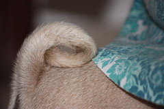 Tail ends (netman007 (Andre` Cutajar)) Tags: blackandwhite orange dog brown cute nice expressions malta andre peaches cutajar netman007