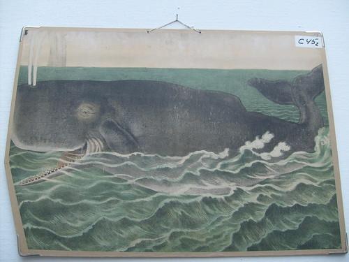Selvom den medicinske relevans er til at overse, blev hvalen her en personlig yndling.