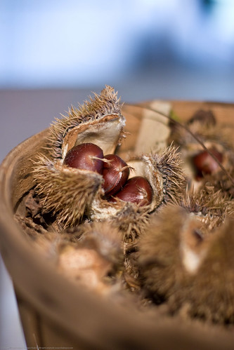 Edible Forest Gardens: chestnuts in husks