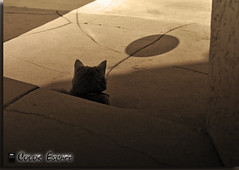 Neutral Cat and Shadow (Color Escape) Tags: shadow brown abstract cat interesting beige tan neutral