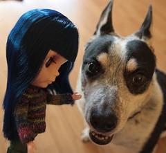 hi, doggy (15-365)