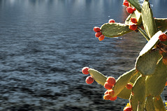 cactus alle 5 Terre (effendix) Tags: cactus terre 5terre