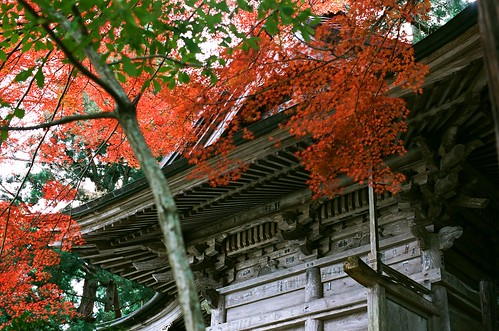 Autumn foliage in Chusonji temple