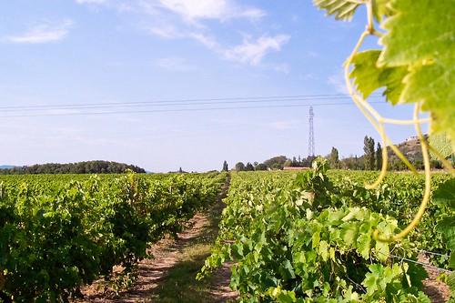 le vignoble du domaine des agates