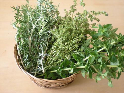 herbs - rosemary, thyme, oregano