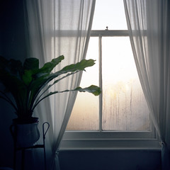 A Clean Start & Curtains for Bush (theGentleman) Tags: film mediumformat ties bathroom shower for stand bush curtains portra400nc condensation obama inauguration potplant tinaturner yashica635 steamywindows f3580mm