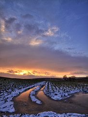 Frozen tracks (Ian Humes) Tags: winter sunset snow ice water field rural geotagged northernireland agriculture soe muddy brusselsprouts countydown comber canon50d anawesomeshot