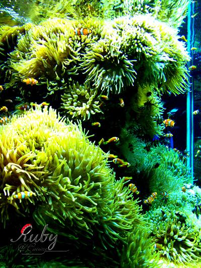 Monaco_aquarium_nemo