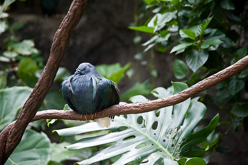 Central_Park_Zoo-15