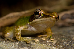Camping Trip Pt3: Frog Portrait