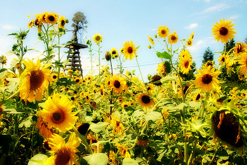 sun(new)