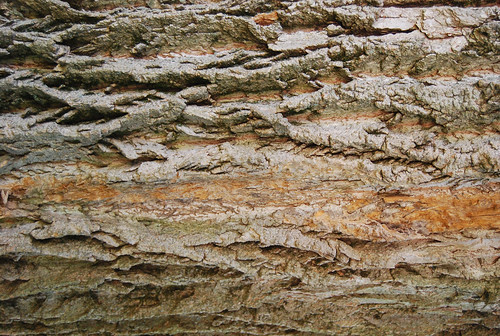 Tree Bark Texture 05