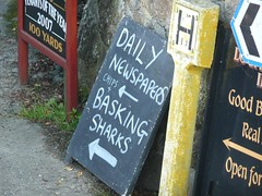 Newspapers and basking sharks at Treen