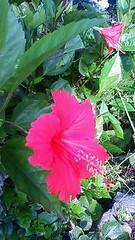 南国的な花