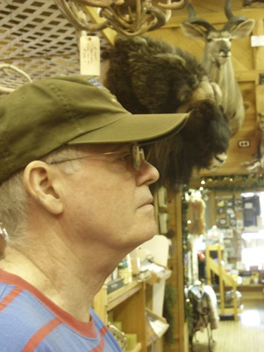 David as compared to a musk ox