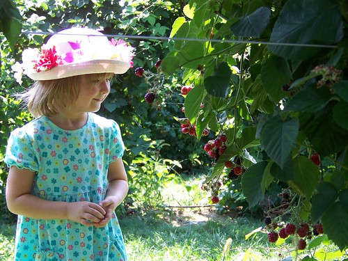 C berries