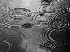 Ripple Effect (sea turtle) Tags: seattle park cloud rain clouds circle bay drops circles ripple drop raindrops ripples raindrop goldengardens shilshole goldengardenspark shilsholebay rippleeffect