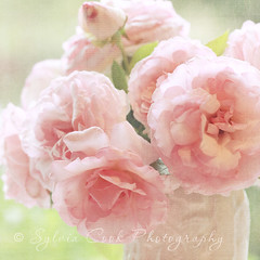 for her birthday (slcook52 (Sylvia)) Tags: birthday pink flower texture rose explore inmyhouse shabbychic sigma105mmf28 florabella copyrightedallrightsreserved