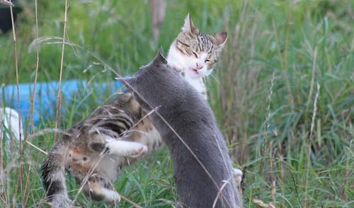 Cat-Fu Tussel