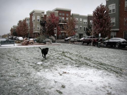 Snowy Henry