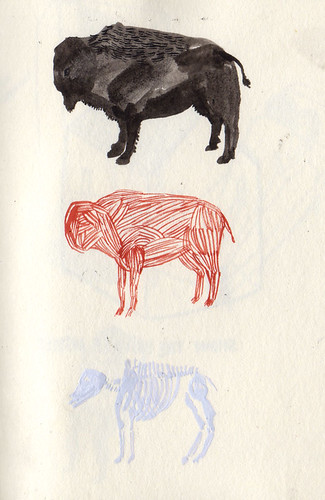 stripped buffalo sketch