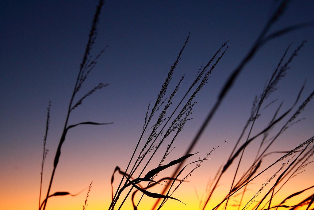 IMAGE: http://farm4.static.flickr.com/3479/4082602164_2ab81aef02_b.jpg