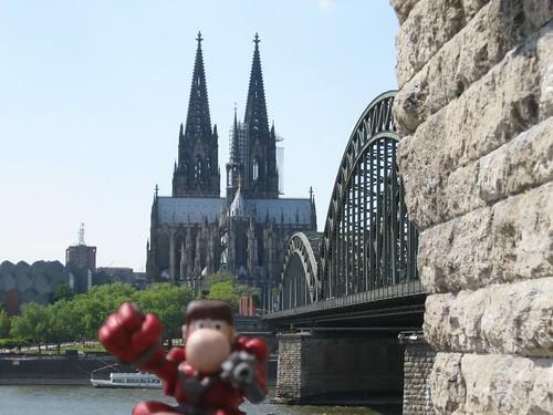 Narizón errante en Colonia, Alemania