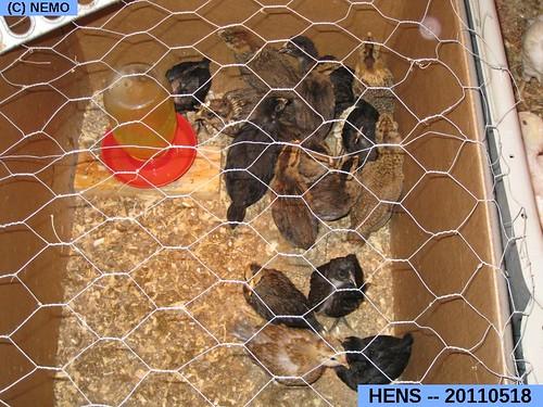 HENS -- 2011.05.18