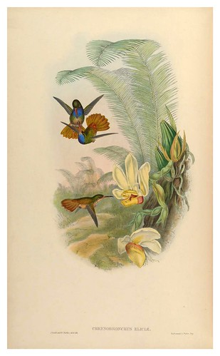 020-An introduction to the Trochilidae or family of humming-birds- Vol 5- 1861-John Gould