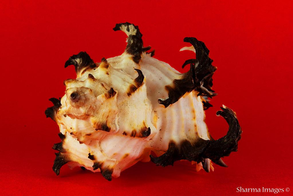 Day 009 | January 09, 2009 | Sea Shell