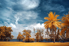 Pasir Ris Park (Dannie Tj. - ) Tags: singapore d70s infrared digitalcameraclub platinumphoto oldschooldigital ultimateshot thatsclassy colourartaward earthasia rubyphotographer vosplusbellesphotos goldieirfilter590nm thenewselectbest